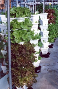 Tower Hydroponic Growing System