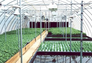 Raft Hydroponic Growing System