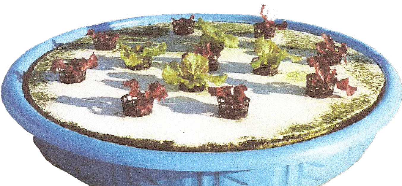 Other hydroponic growing systems hydrogrosystems for Hydroponic pool