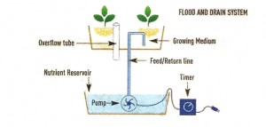 Flood-and-Drain Hydroponic Growing System